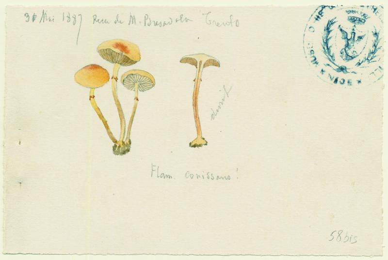 Pholiote poudreuse ; Pholiote des graminées ; champignon_0