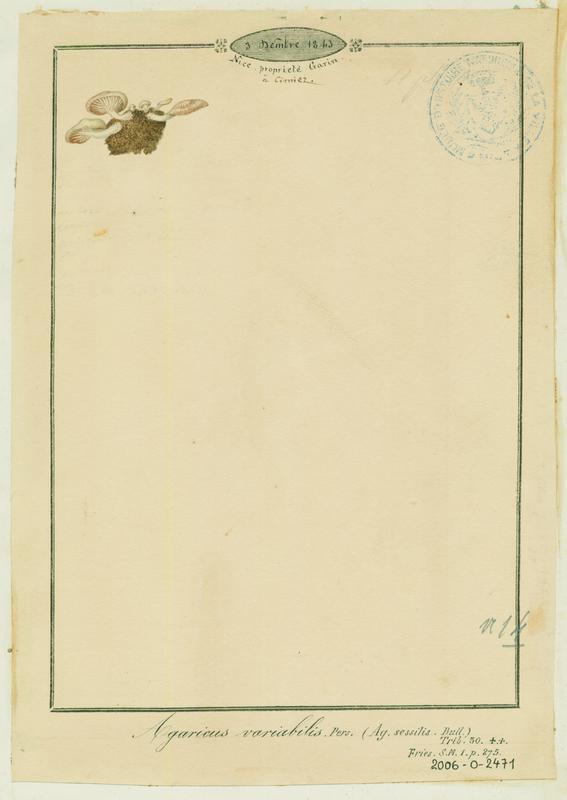 Crépidote variable ; champignon_0