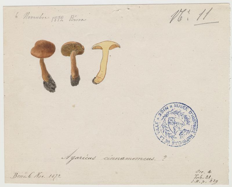 Agaric à lames cannelle (?) ; champignon