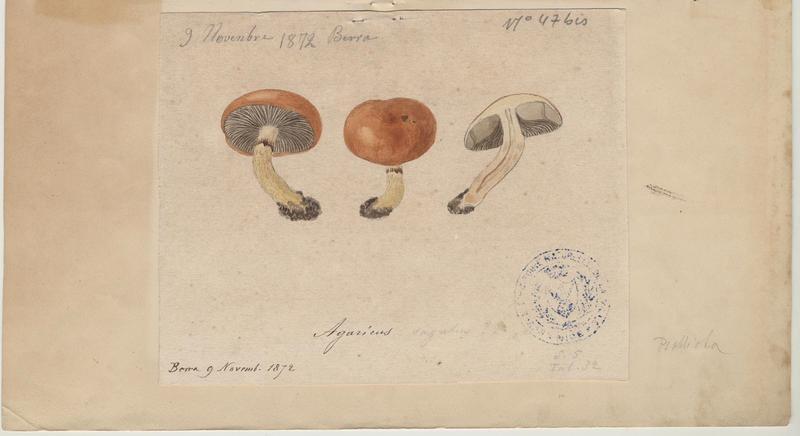 Agaric ; champignon