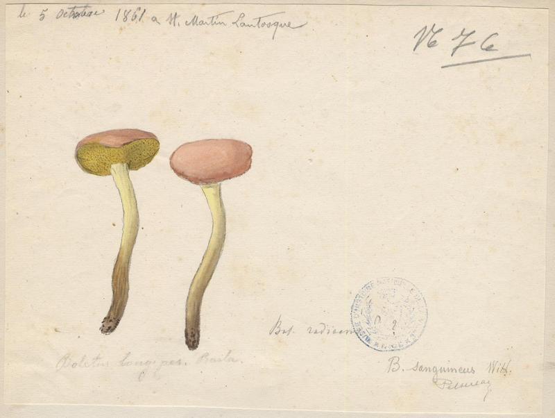 Bolet ; champignon_0