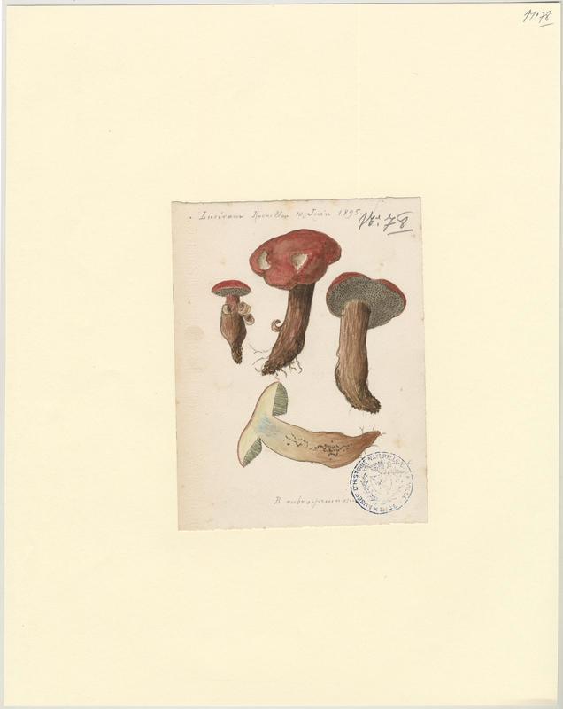 Bolet ; champignon