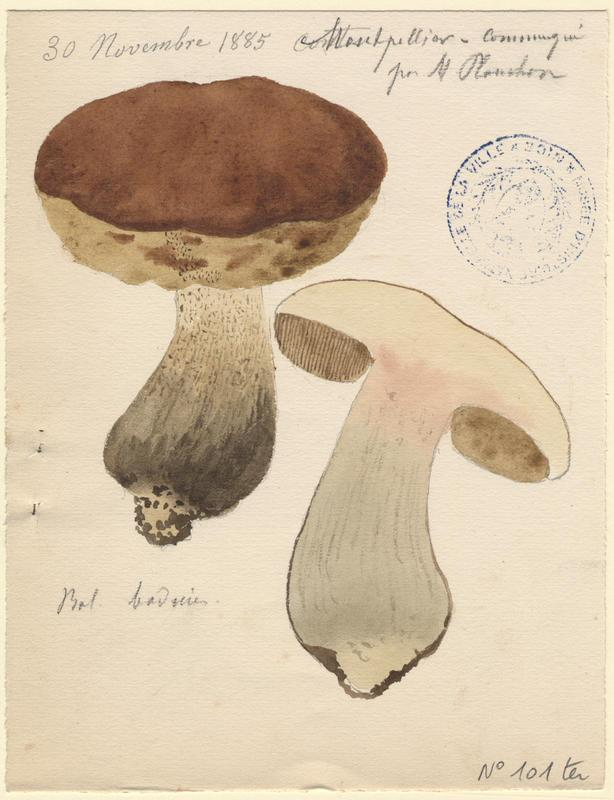 Bolet bai ; champignon_0