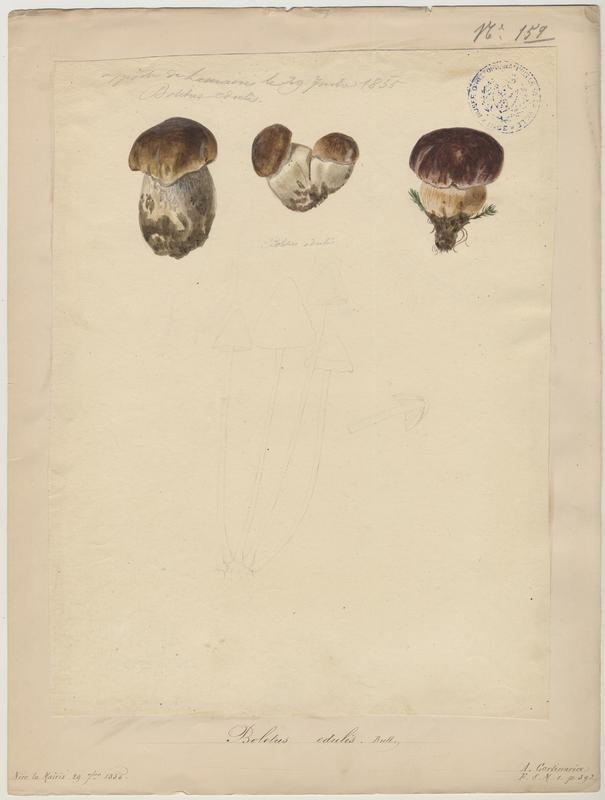 Cèpe de Bordeaux ; Gros-pied ; Potiron polonais ; champignon_0