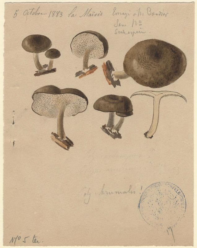 Polypore d'hiver ; champignon_0