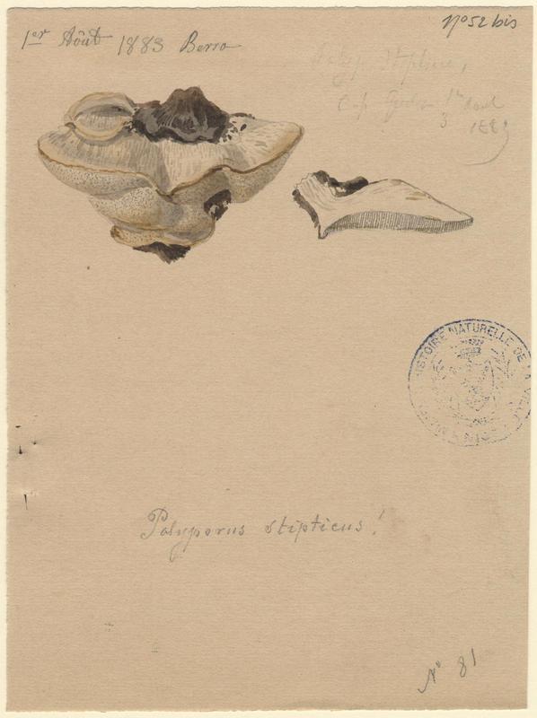 Polypore amer ; Leptopore blanchâtre ; Polypore styptique ; champignon