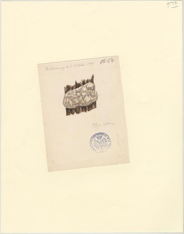 Polypore vitreux ; champignon_0