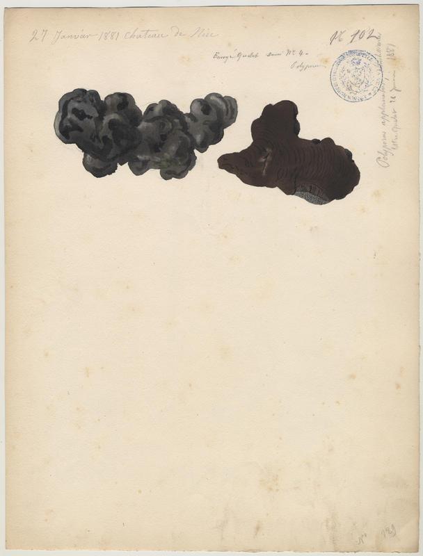 Polypore plat (?) ; champignon