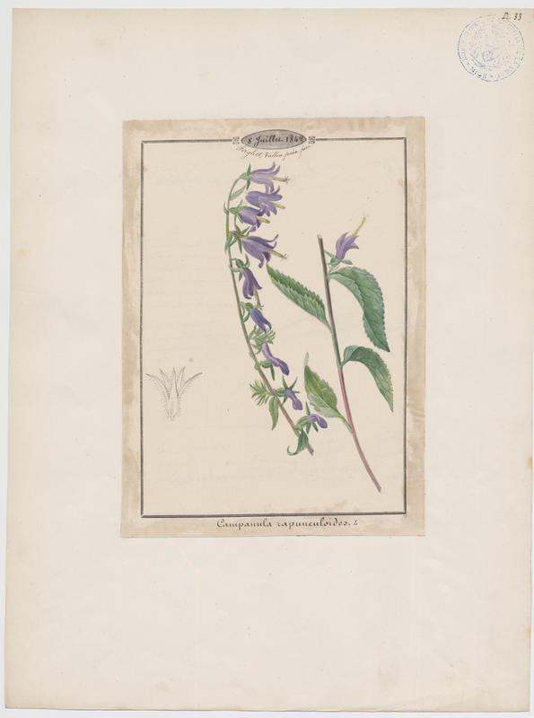 BARLA Jean-Baptiste (attribué à) : Campanule, plante à fleurs
