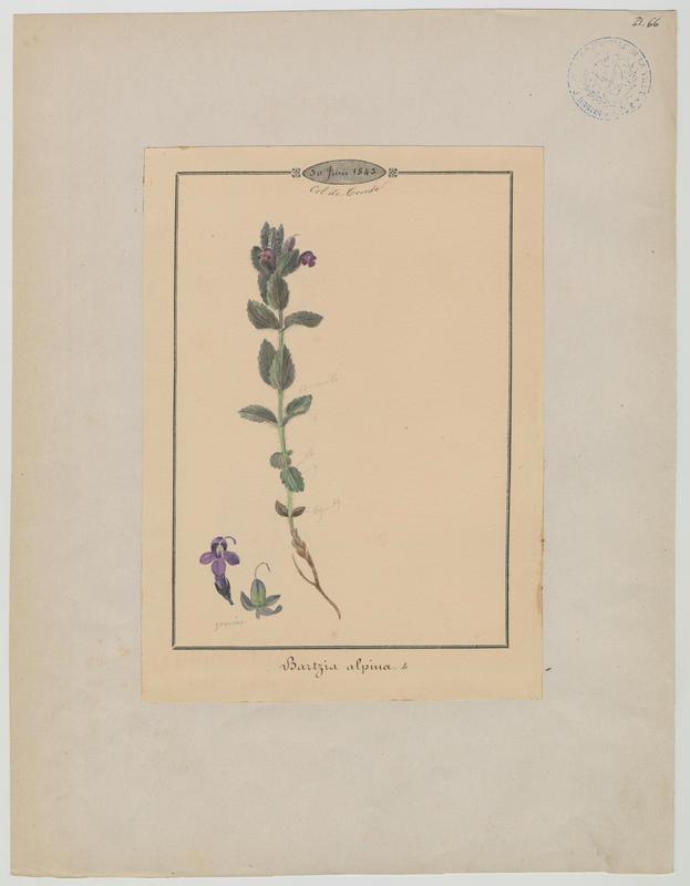Plante à fleurs_0