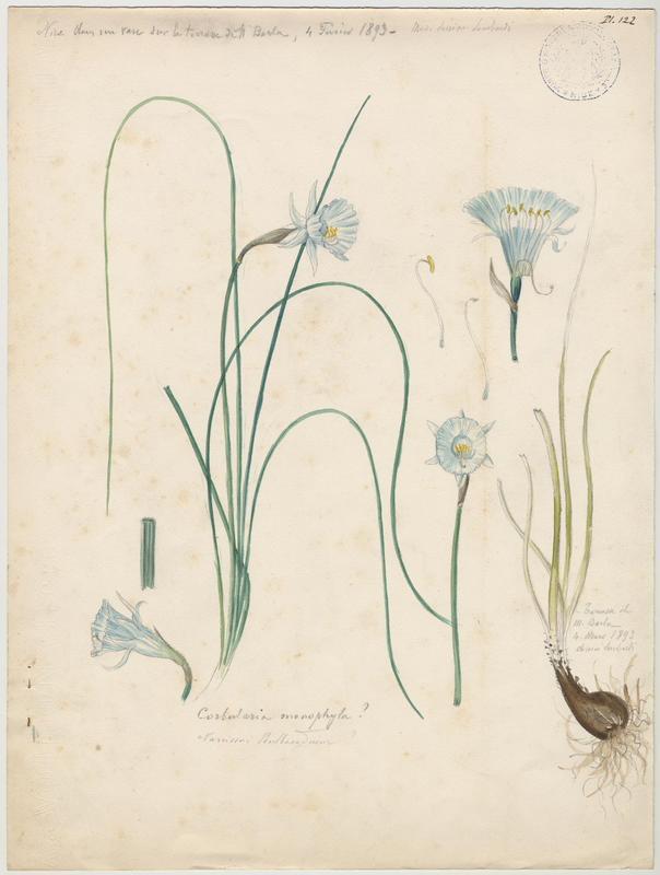 LOMBARDI Charles : Trompette de Méduse, plante à fleurs