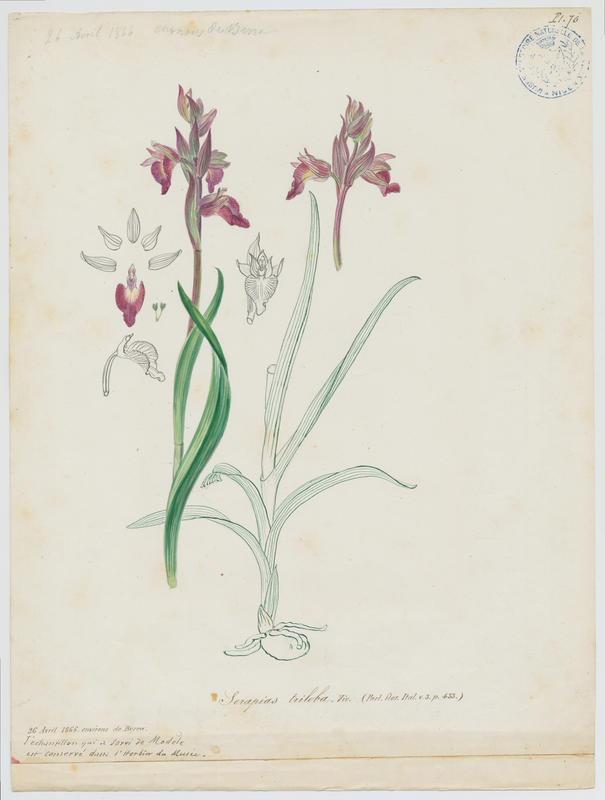 Orchidée ; plante à fleurs_0