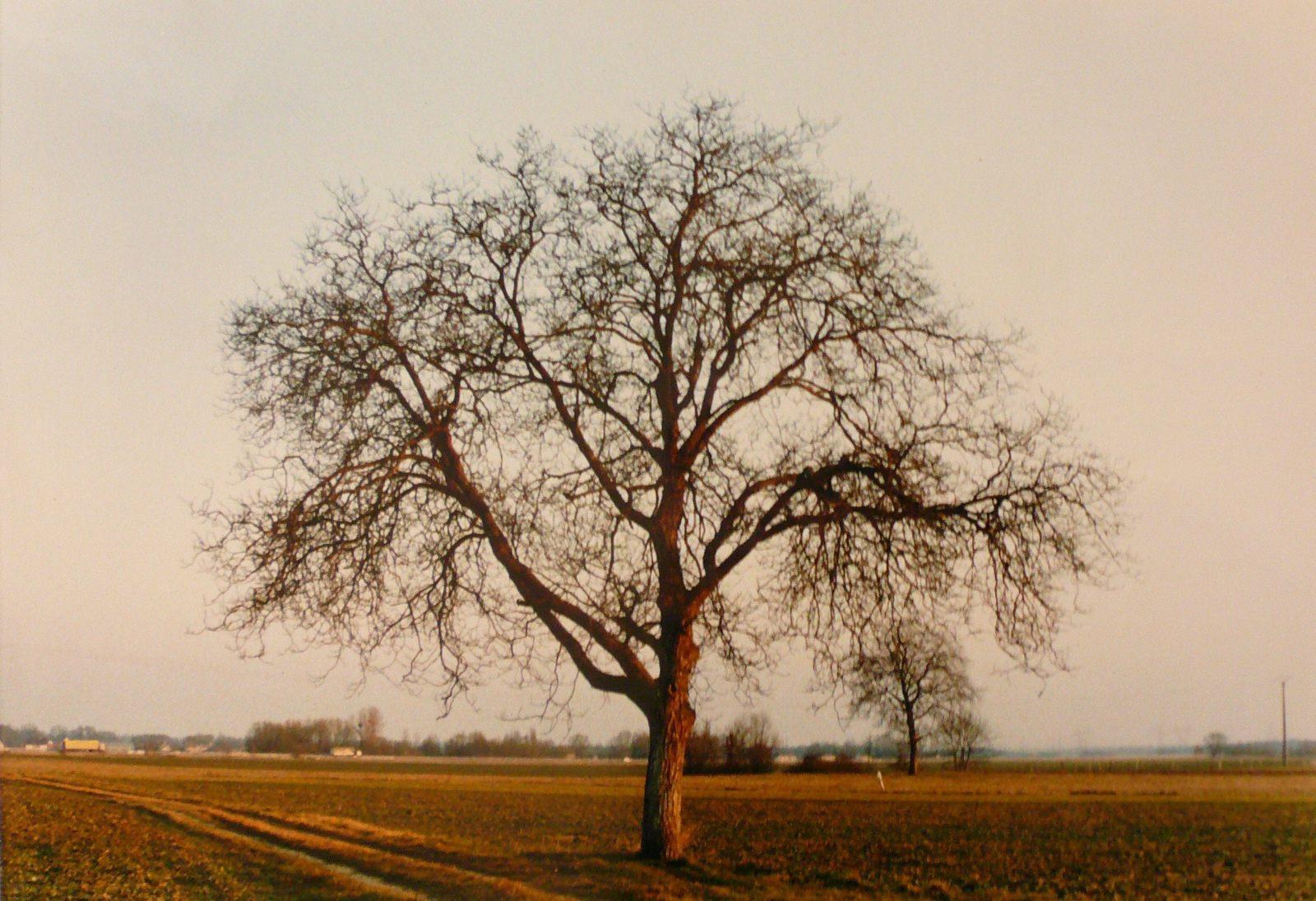 Un arbre dans la plaine_0