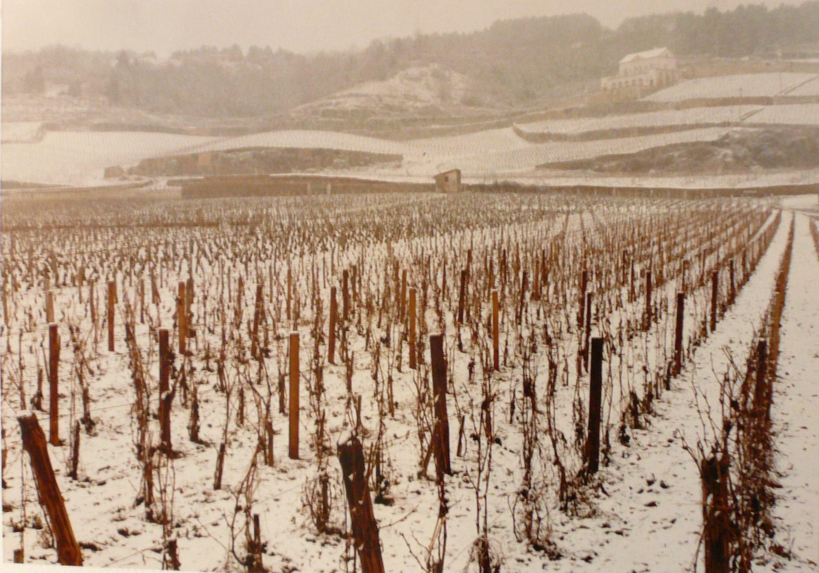 Vigne enneigée sous le Château gris_0