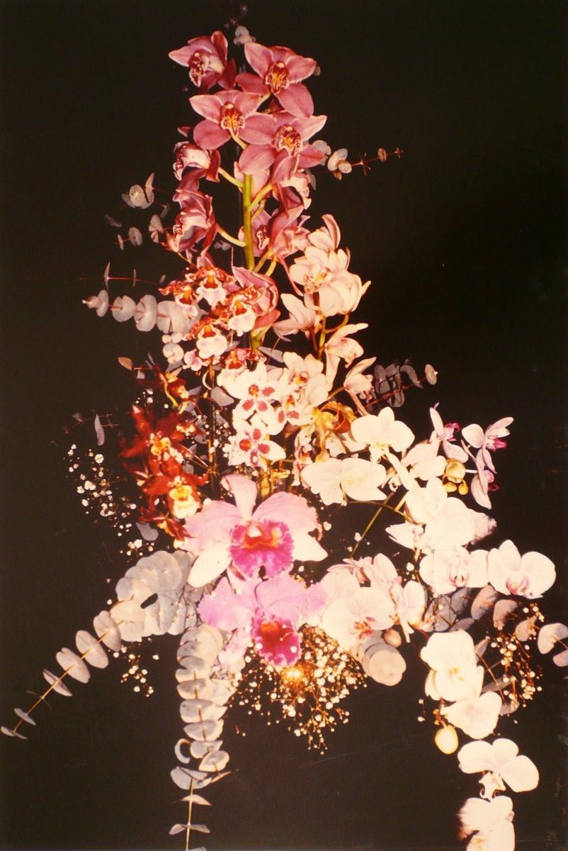 Orchidées, Cymbidium et Phalenopsis_0