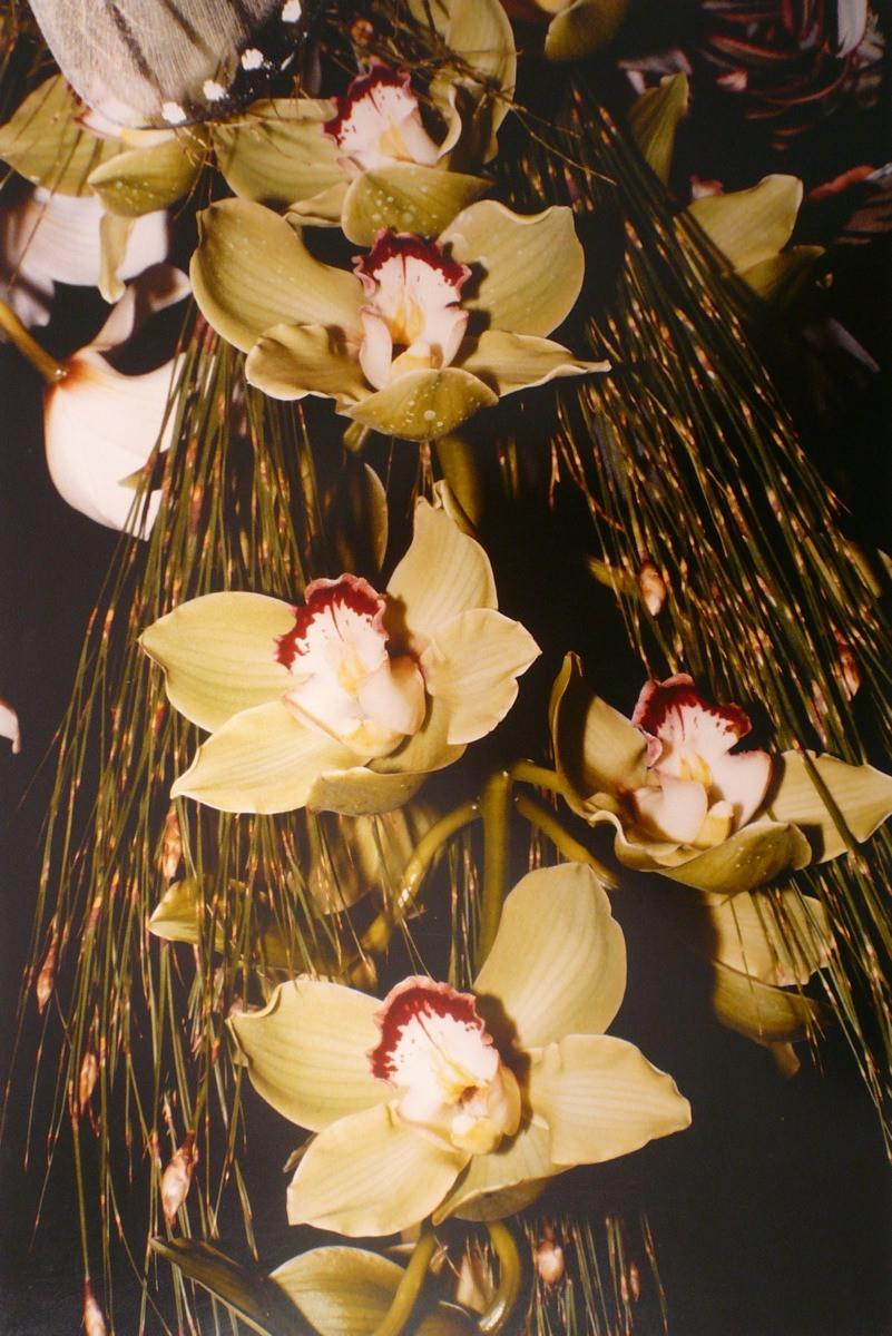 Orchidées, cymbidium_0