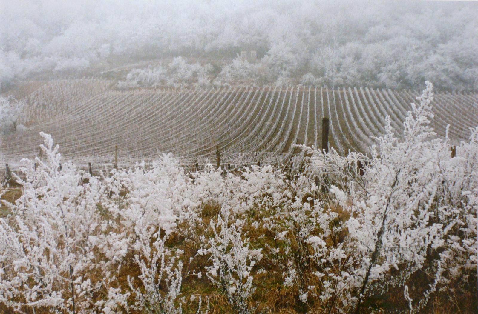 Givre sur les vignes, vers la Côte_0