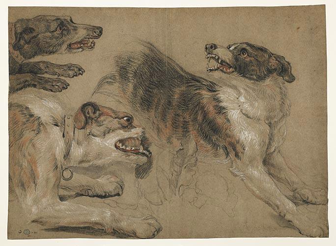 Feuille d'études, trois têtes de chiens_0