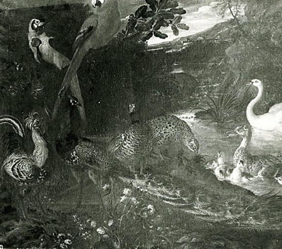 Oiseaux divers: perroquets, coq, cygne, canards, paon, faisans