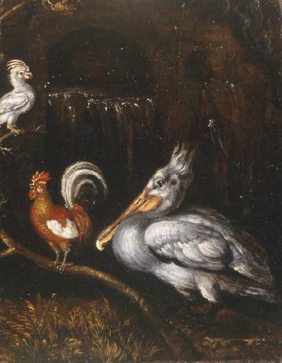 Pélican, coq et perroquet_0