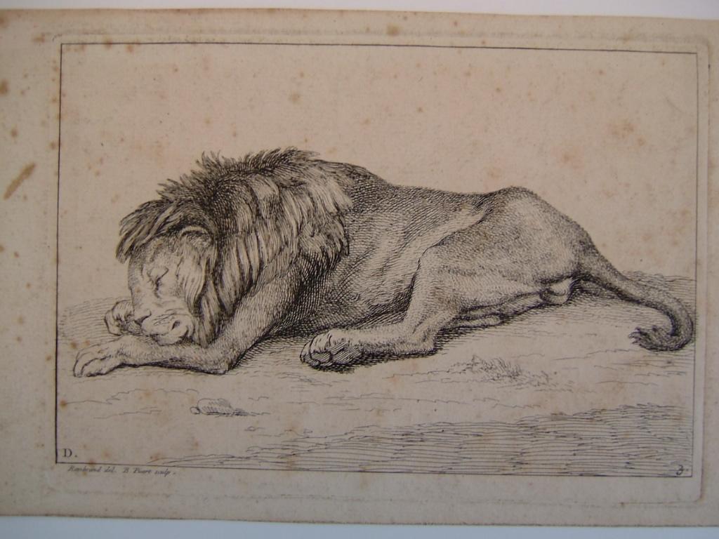 PICART Bernard ;REMBRANDT (d'après ) : Lion couché