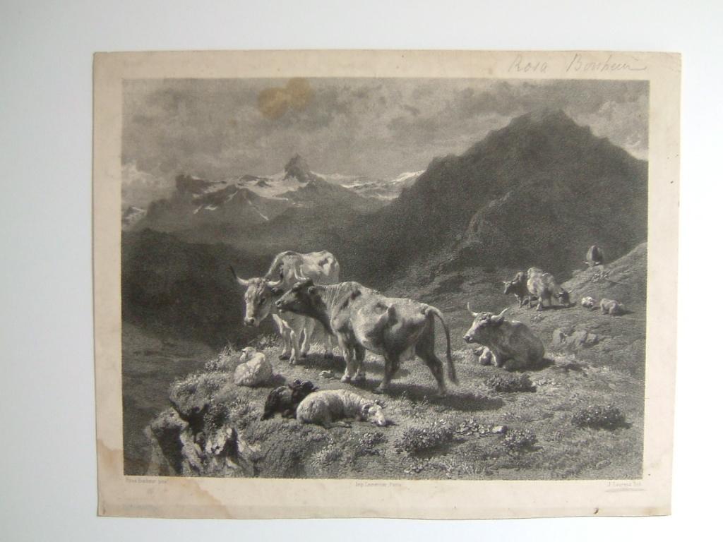 Pâturages en montagne (factice)_0