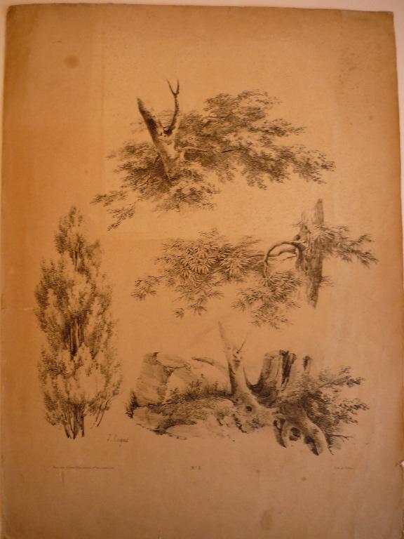 COIGNET Jules : Planche pour modèle (Etude troncs d'arbres n° 1)