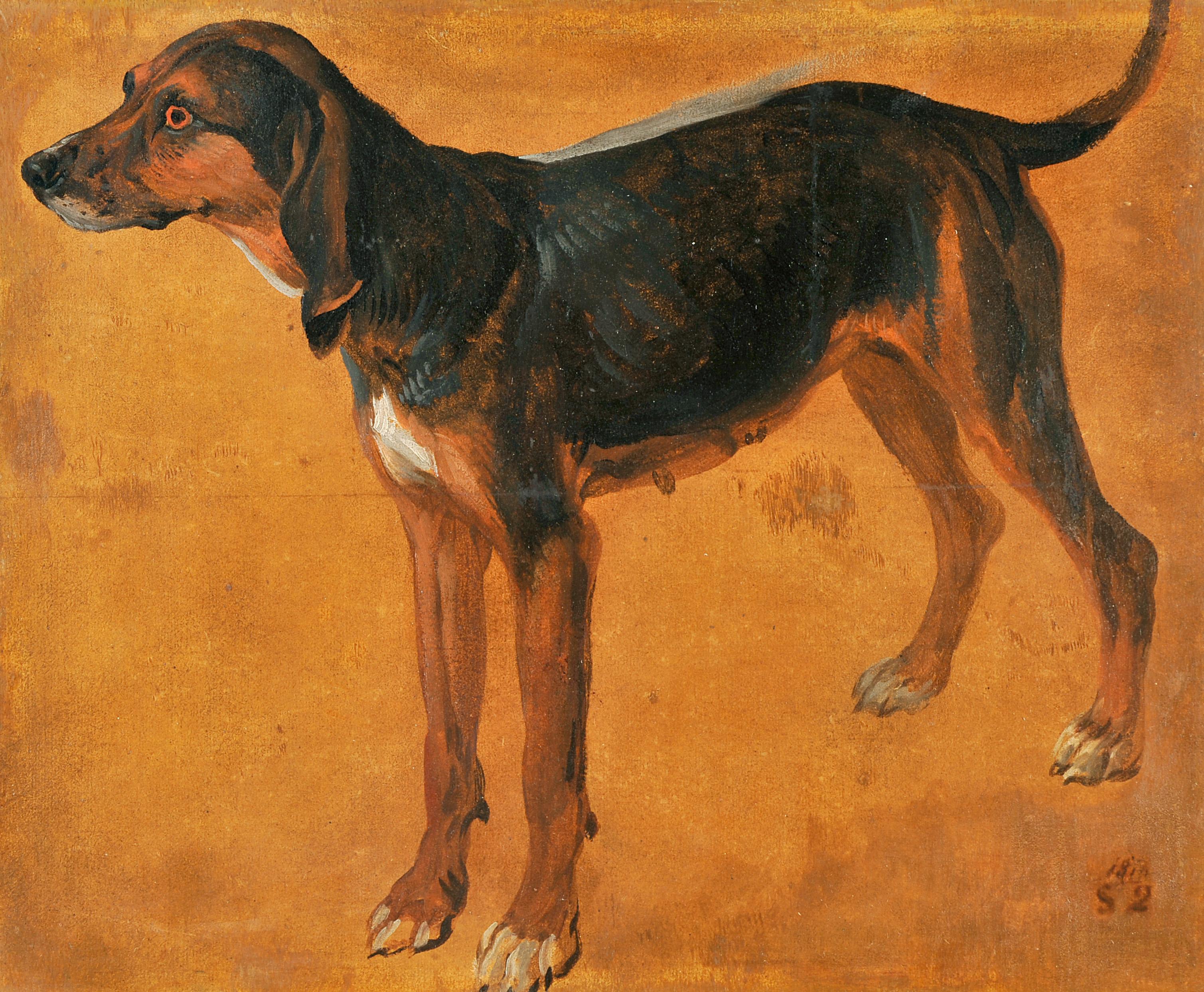 Rougeaude, chienne de la meute de Louis XIV_0
