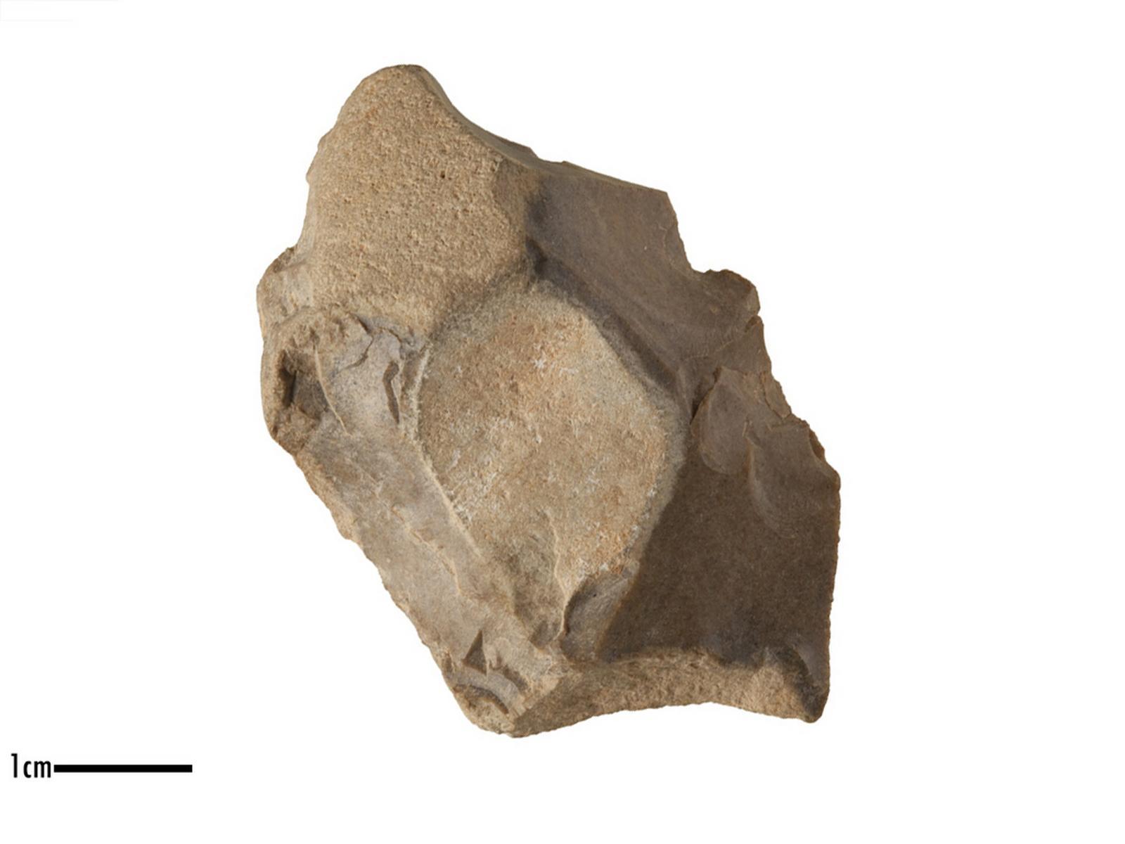 Denticulé (latéral)_0