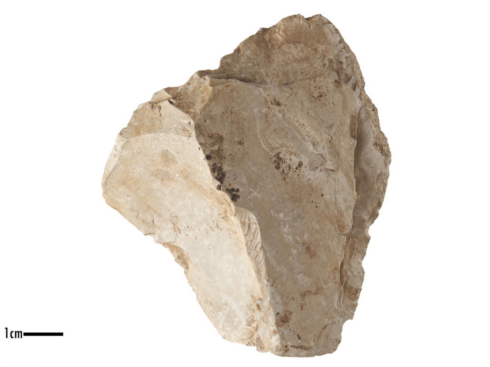 Racloir (latéral), denticulé (transversal)_0