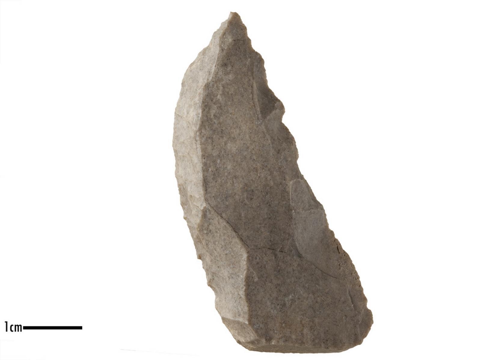 Racloir (convexe), denticulé_0