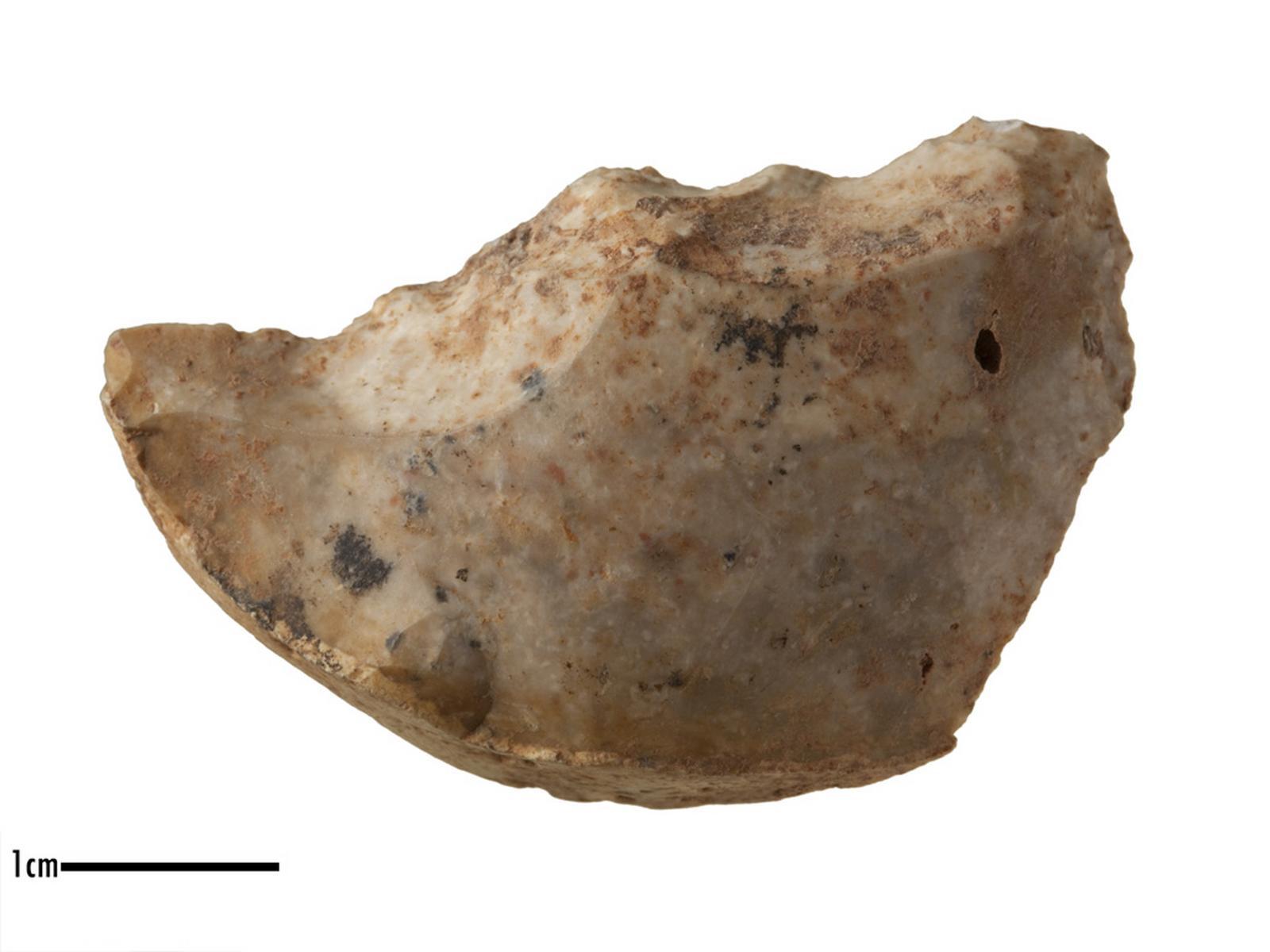 Denticulé (transversal)_0