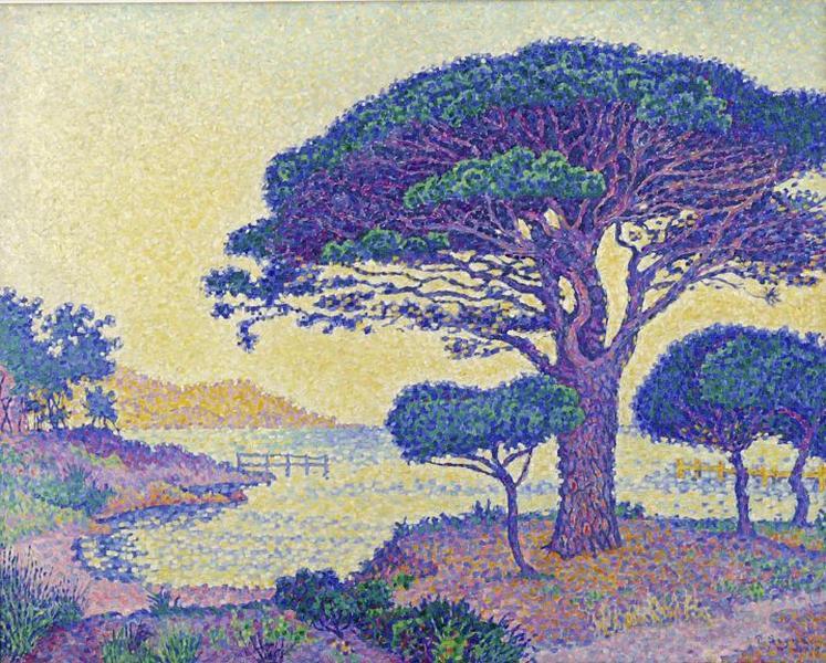 Saint-Tropez, les pins parasols aux Canoubiers