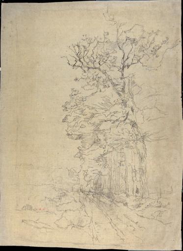 Chemin le long d'un bois
