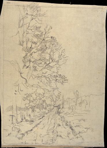 Chemin bordé d'arbres_0