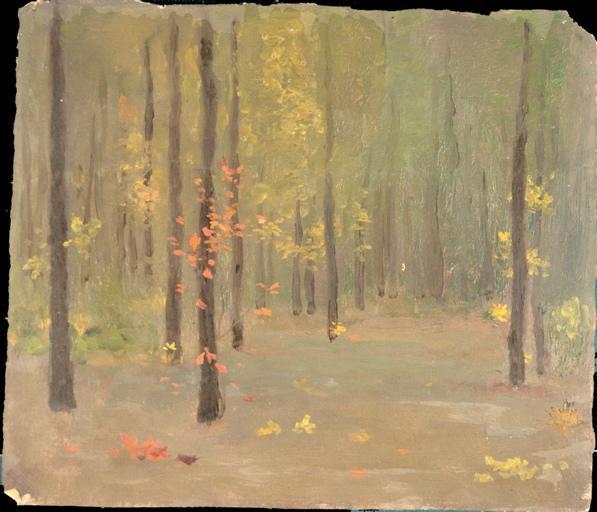 Sous-bois en automne_0