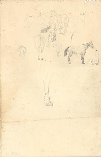Etudes de cheval