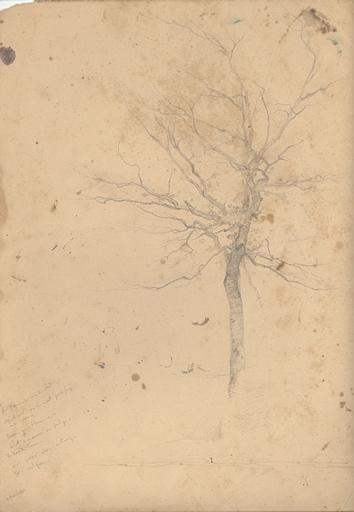 Etude d'un arbre défeuillé_0