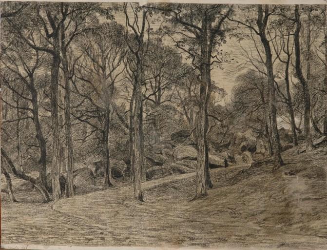 Chemin dans la forêt_0