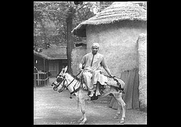 Un ânier du Caire