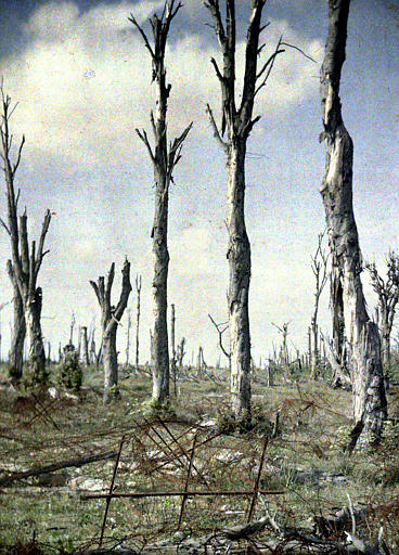 Un coin du château (parc), arbres morts
