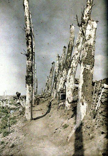Terrain retourné par les combats, arbres mutilés, soutènement d'un talus