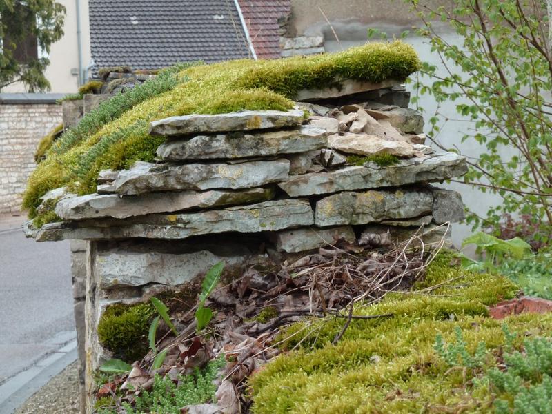 Mur de clôture. Chaperon en plaquettes de calcaire posées en tas de charge.