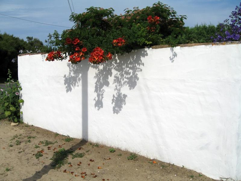 Mur de clôture. Chaperon en tuiles faîtières.