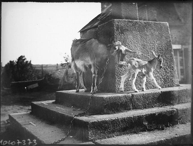Une chèvre et son chevreau sur les marches d'un escalier