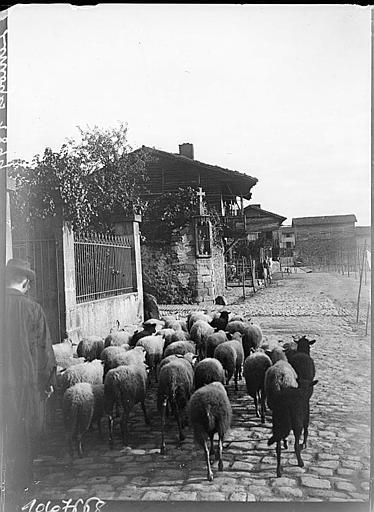 Troupeau de moutons dans une ruelle pavée
