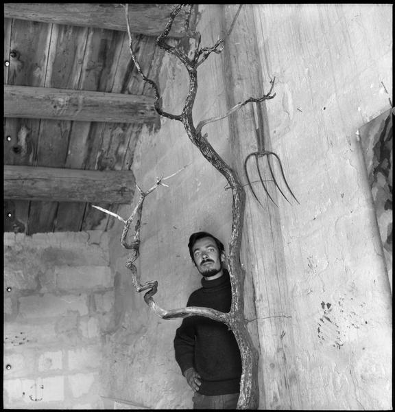 [Portrait de Gérard Cabus dans le mas, le visage encadré par une branche d'arbre]