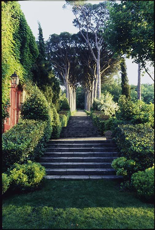 Parc: escalier et allée d'arbres