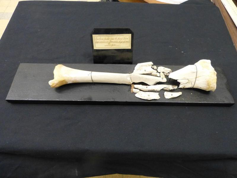 Fractures fusil Lebel, vue générale