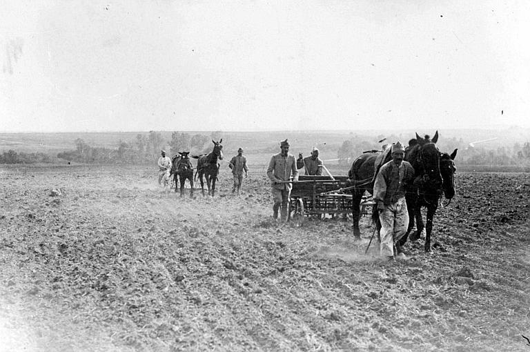 Agriculture : champs mis sous culture par les autorités militaires françaises, herses attelées